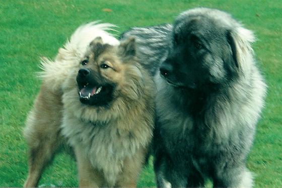 Déroulement consultation Falc'hun - Comportement canin